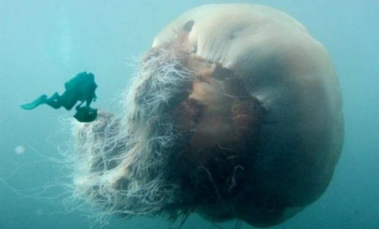Самые занимательные факты о морских обитателях