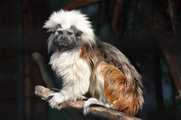 35 самых странных и смешных животных, слепленых природой из того, что было