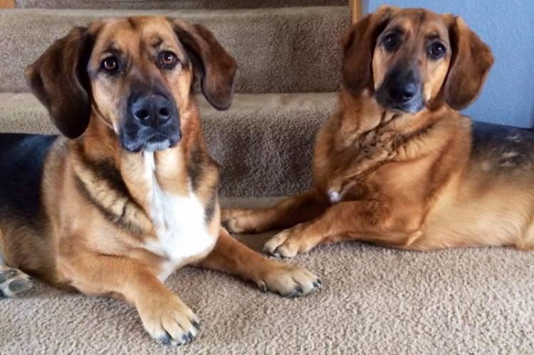 30 смешанных пород собак, которых вы вряд ли видели