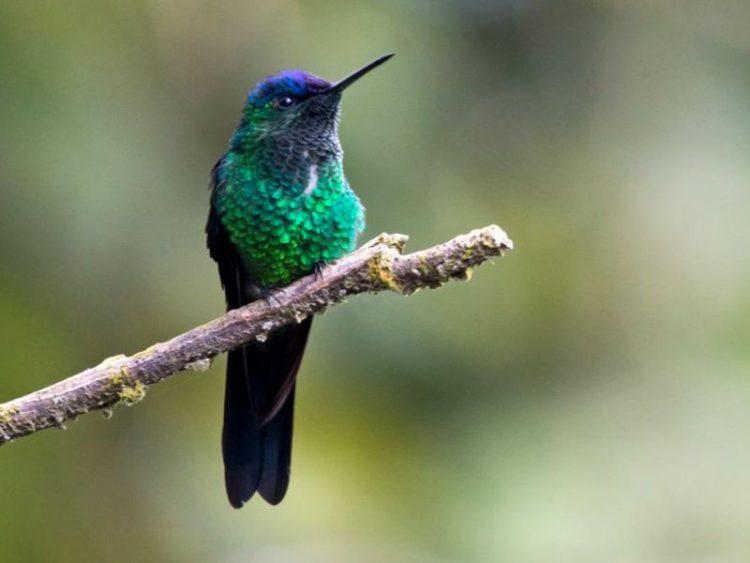 33 уникальные птицы, которые живут в бразильских джунглях