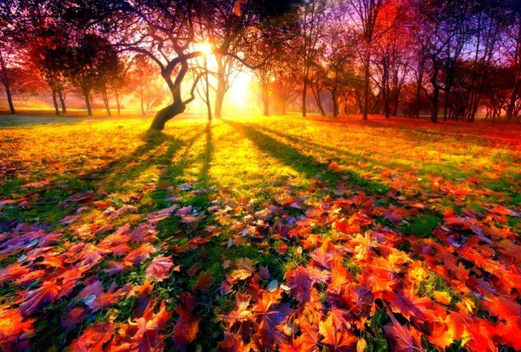 30 душевных примеров того, что осень — не время для депрессии