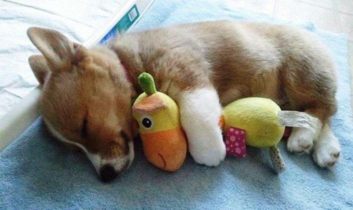 Милые животные, которые сладко уснули: 50 фото